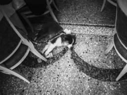 Un cagnolino appisolato sul pavimento