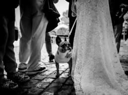 La sposa tiene vicino a se il proprio amico a quattro zampe